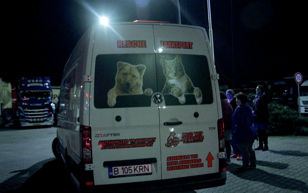 Ankunft im neuen Leben – So reisen unsere Hunde nach Deutschland