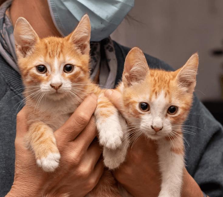 Cooper & Ginger