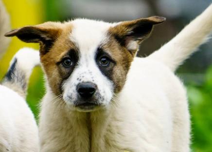 Puppy Nummer vier